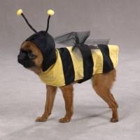 HALLOWEEN: Disfraces para Perros!