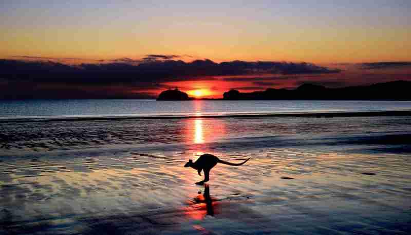 Kangourou sur la plage au coucher du soleil