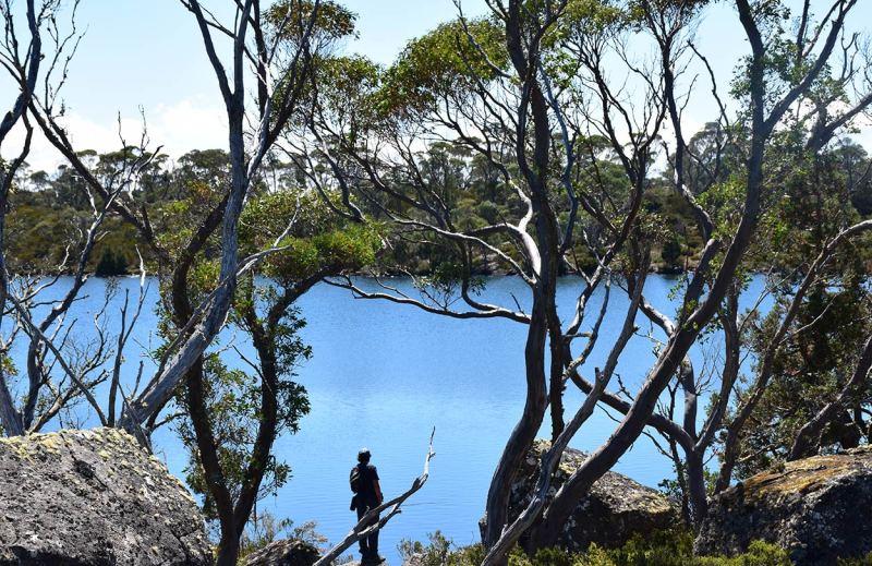 Radonnée en Tasmanie