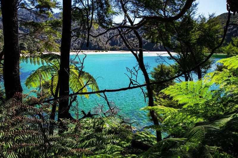 Forêt et plage dans le Parc Nation Abel Tasman en Nouvelle Zélande sur l'île du Sud
