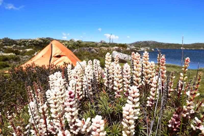 Camping lors d'une randonnée en pleine nature