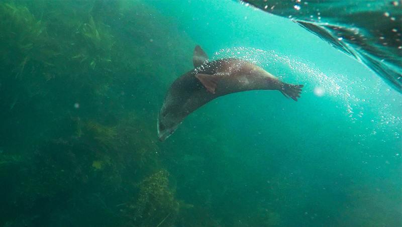 Voir des otaries en Nouvelle-Zélande : kayak à Kaikoura