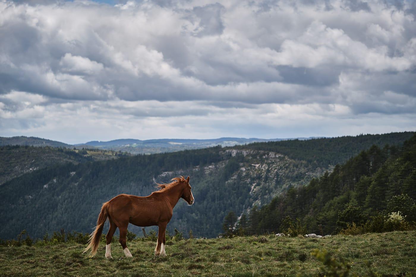 Cheval dans un paysage grandiose de Lozère
