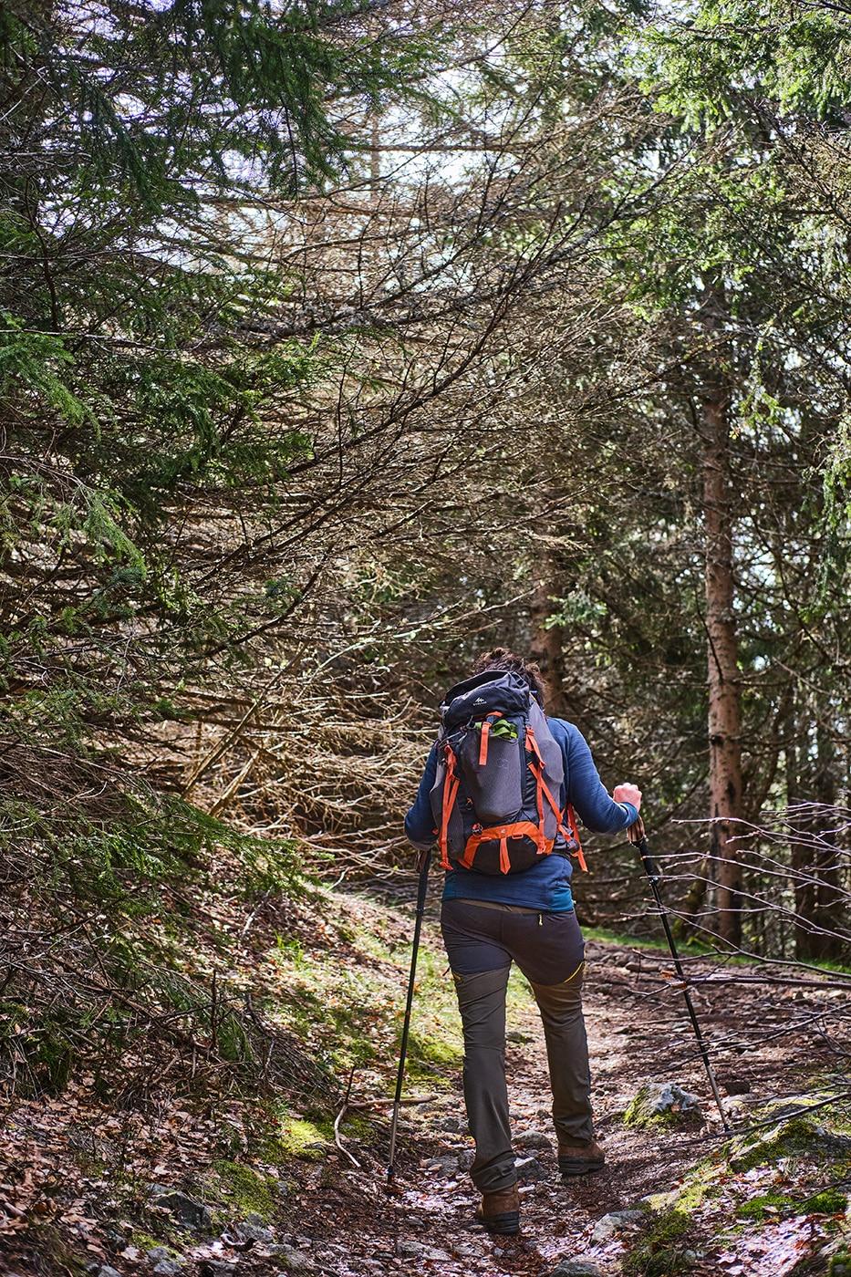 Forêt pour accéder au Mont Lozère depuis Finiels