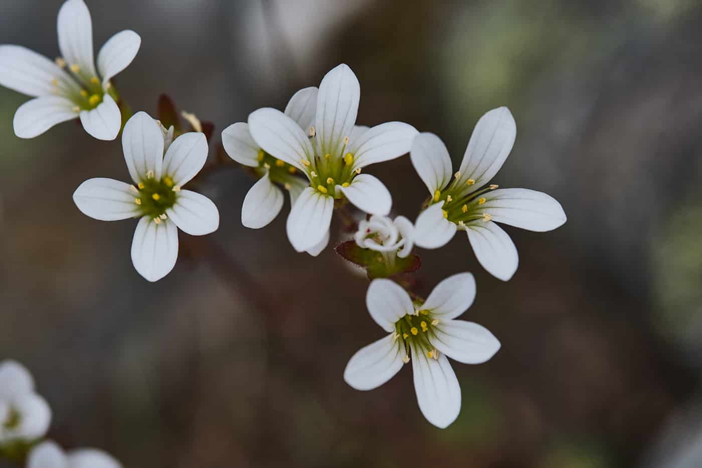 Fleur en Lozère
