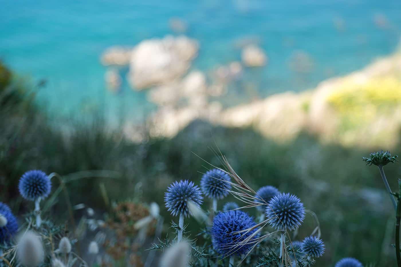 Fleurs de la côte Vermeille