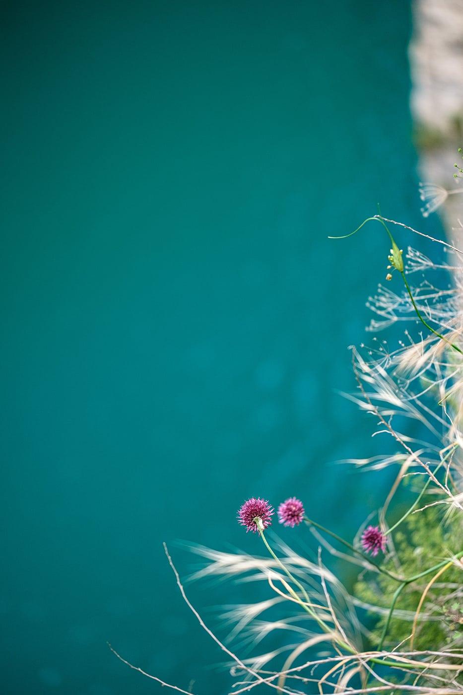 Fleur au congost de mont rebei en espagne blog de voyage
