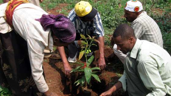 Locals plant avocado trees in Ethiopia's Katbare region in July 2011. (Image Credit: Threes ForTheFuture/Flickr)