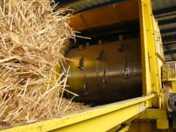 produkcja biomasy
