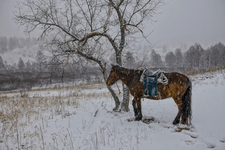 mongolie-hiver-alerte climat