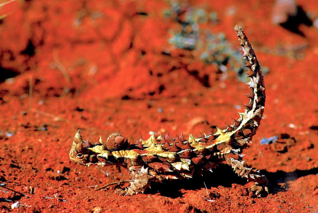 Australie - Centre rouge -