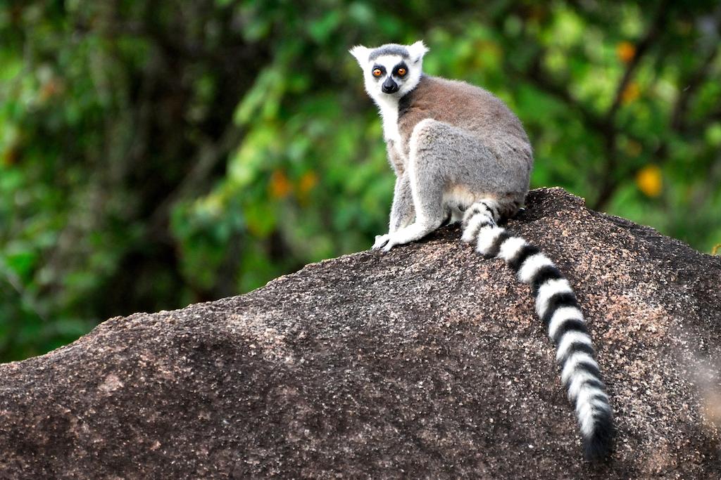 Madagascar - Réserve d'Anja