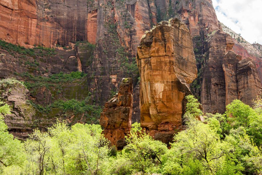Zion national Parc, le plus vert de tous