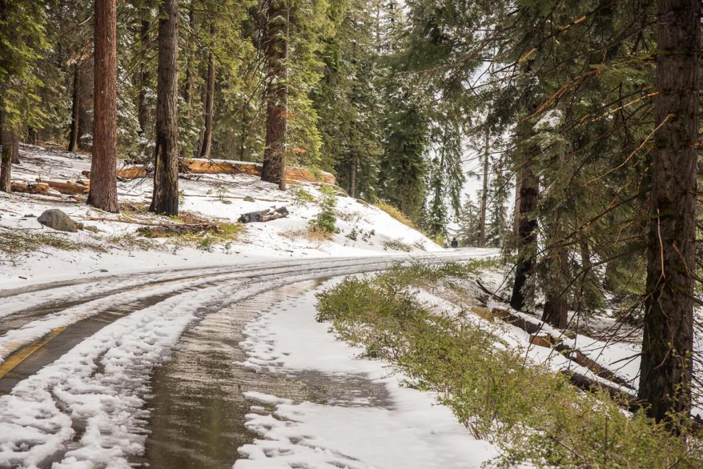 Neige au Sequoia National Park