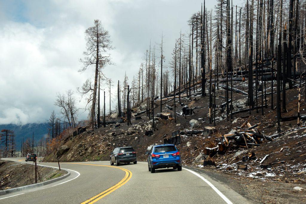 Sequoia du Yosemite dévastés par le feu