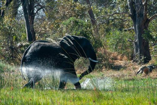 Afrique australe - animaux hors oiseaux