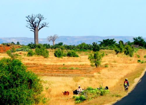 Madagascar - le sud, de Isalo à Tuléar