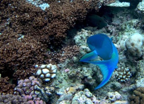 Australie - animaux aquatiques