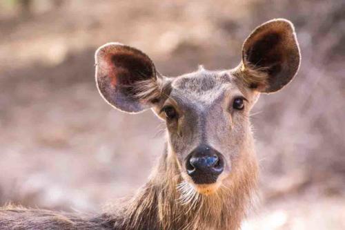 Inde, Rajasthan, Safari à Ranthambore