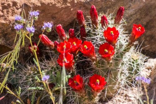 Ouest américain - le désert en fleurs