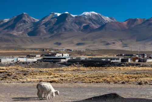 Pérou - Altiplano
