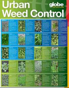 Weed identification chart also knowledge centre globe pest solutions rh globepestsolutions