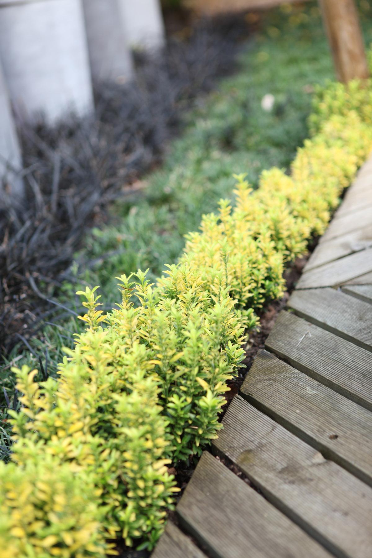 La Collection Globe Planter Fusain Du Japon Happiness