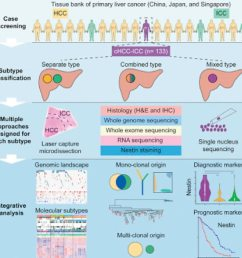 genomic analysis uncovers differences in liver cancer subtypes [ 1024 x 1020 Pixel ]