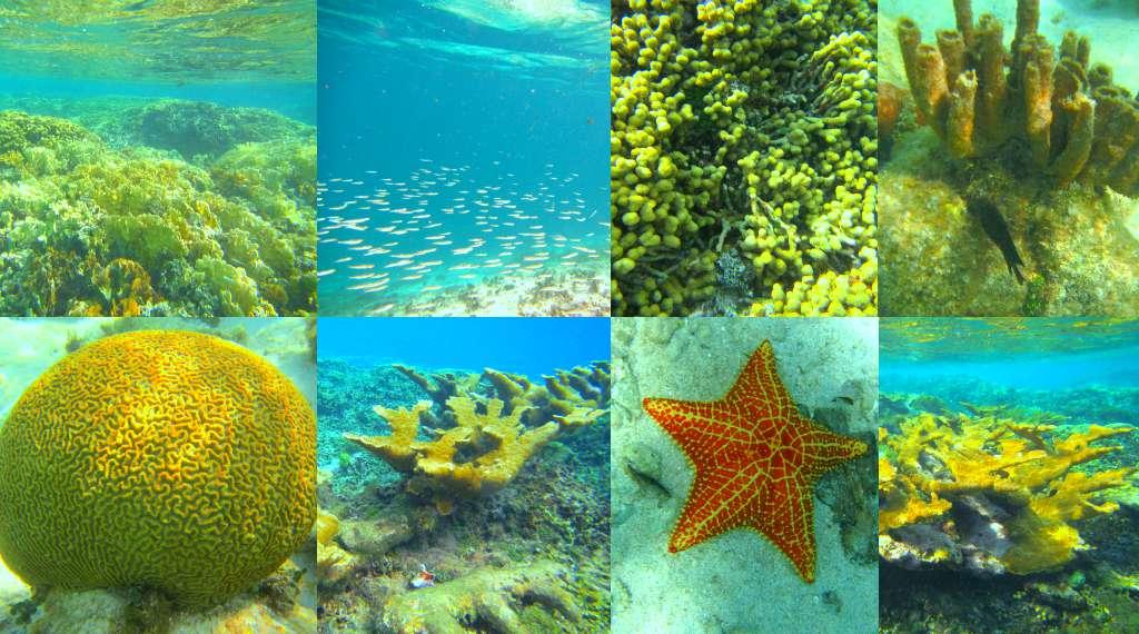 Mesmorising coral gardens in San Blas, Panama