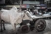Auf der Strasse Chandni Chowk