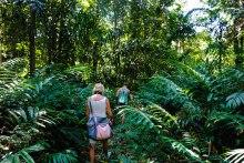 Trekking im Jungle