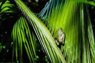 Wo ist der Frosch?