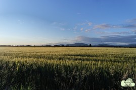 Oregon 1
