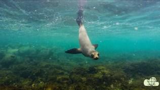 Unterwasser 8