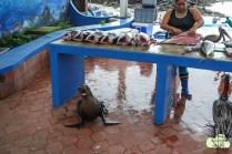 Lobbo wartet auf seinen Fisch