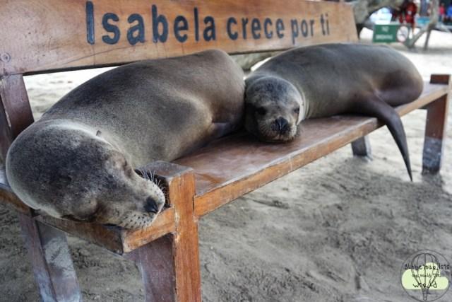 Lobbos im Hafen von Isabella