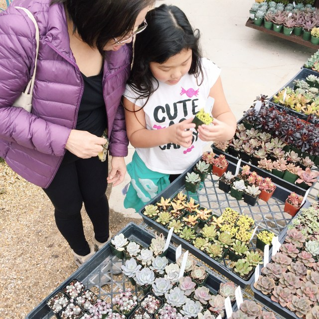 Another perk of homeschooling...Bridgette gets to spend more time with her grandparents! Took my MIL to Flora Grubbs in the city one day and she was in gardening heaven!