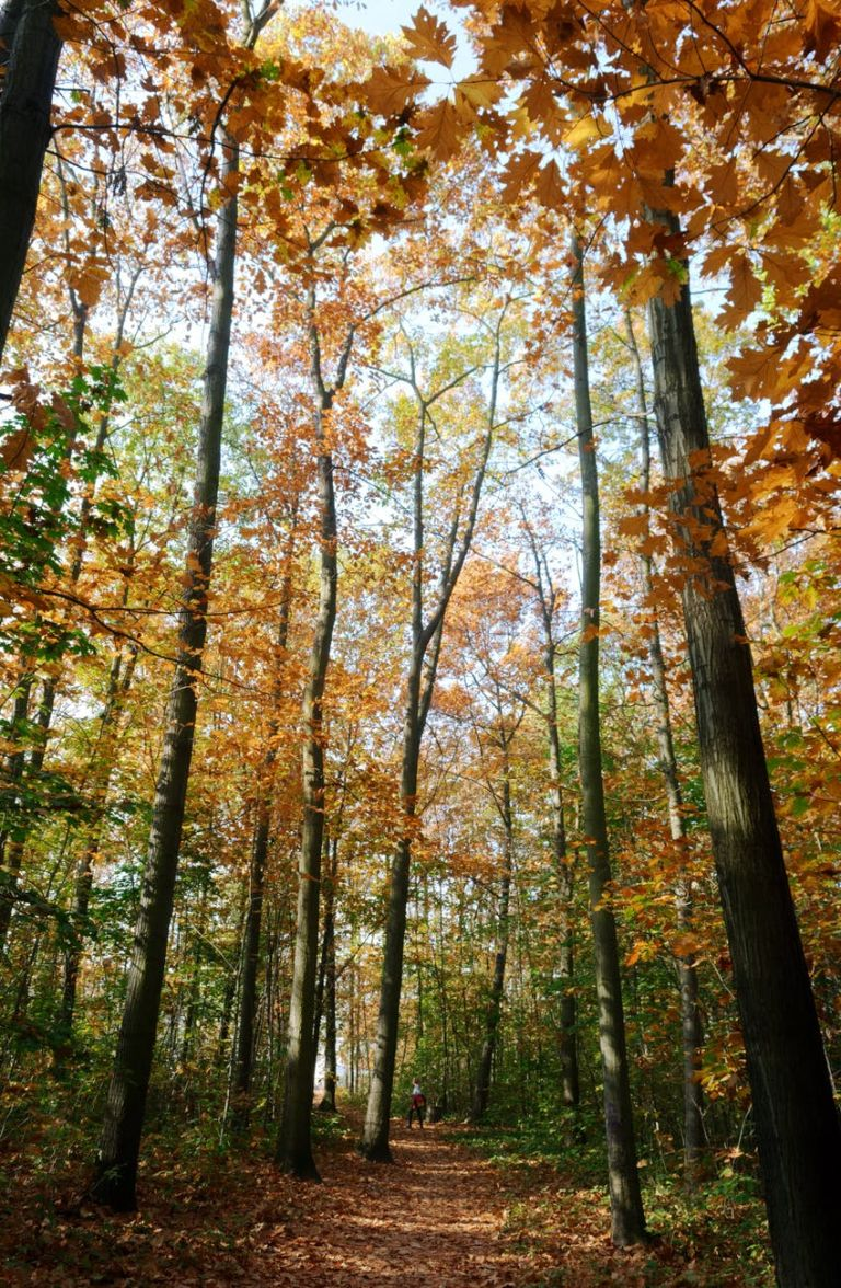 photo of autumn mood forest