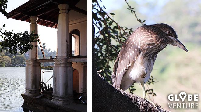 Links: altes Badehaus der Königin. Rechts: frecher Vogel