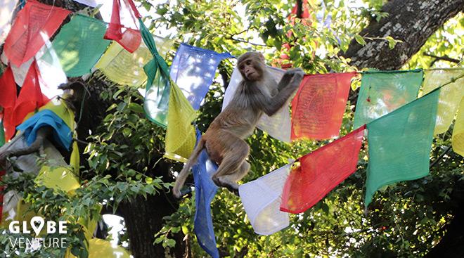 Swayambhu Stupa Kathmandu Affe Gebetsfahnen