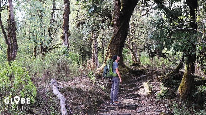 Nepal, Mardi Himal Trek, Pokhara