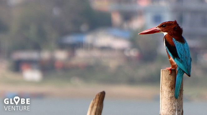 Phewa See Phokara Nepal