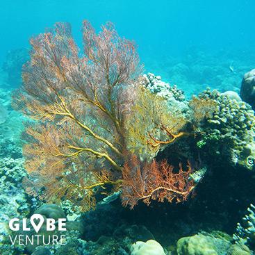 Bali Amed Schnorcheln Koralle