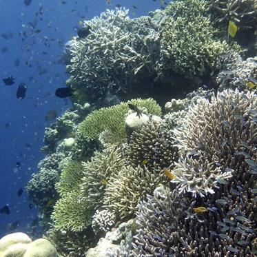 Unterwasserwelt Bunaken