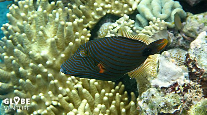 Bunaken Unterwasserwelt