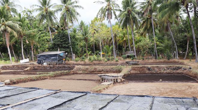 Indonesien Bali Tejakula Saline