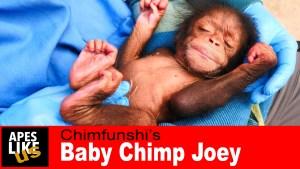 Apes Like Us YouTube