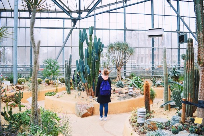 Botanical garden greenhouse in Amsterdam