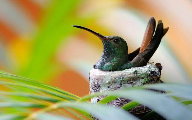 O que significa quando você vê um colibri?