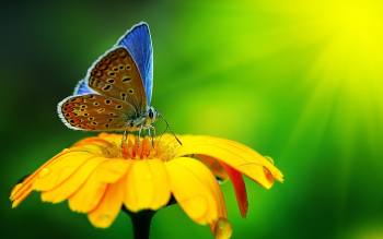 Qual é o significado espiritual da borboleta pousando em você? Você receberá uma resposta colorida